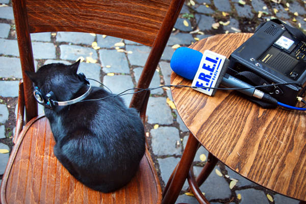 artikel/20170427 Katze web.jpg